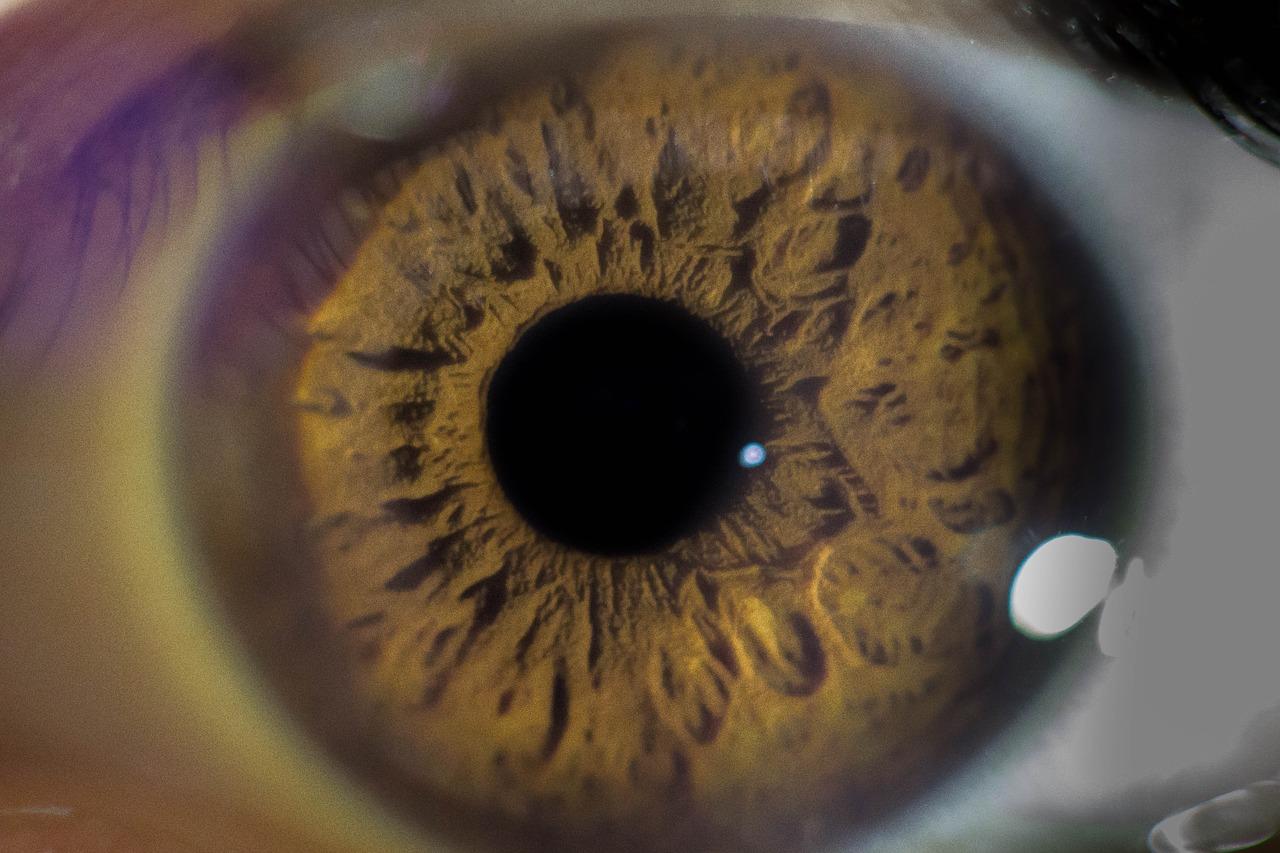 Funkcje wzroku